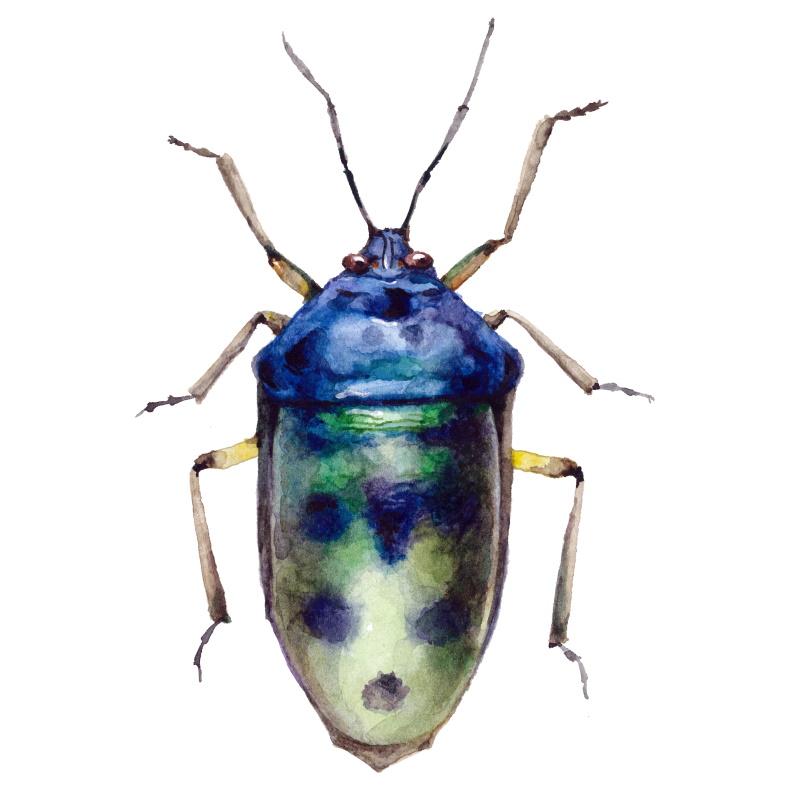 Bug in Alexion CRM